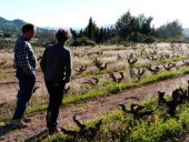 PSOE:45.000 agricultores se beneficiarán de medidas fiscales