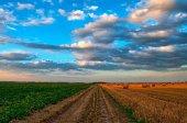 Agroseguro: cuarenta años de protección al campo