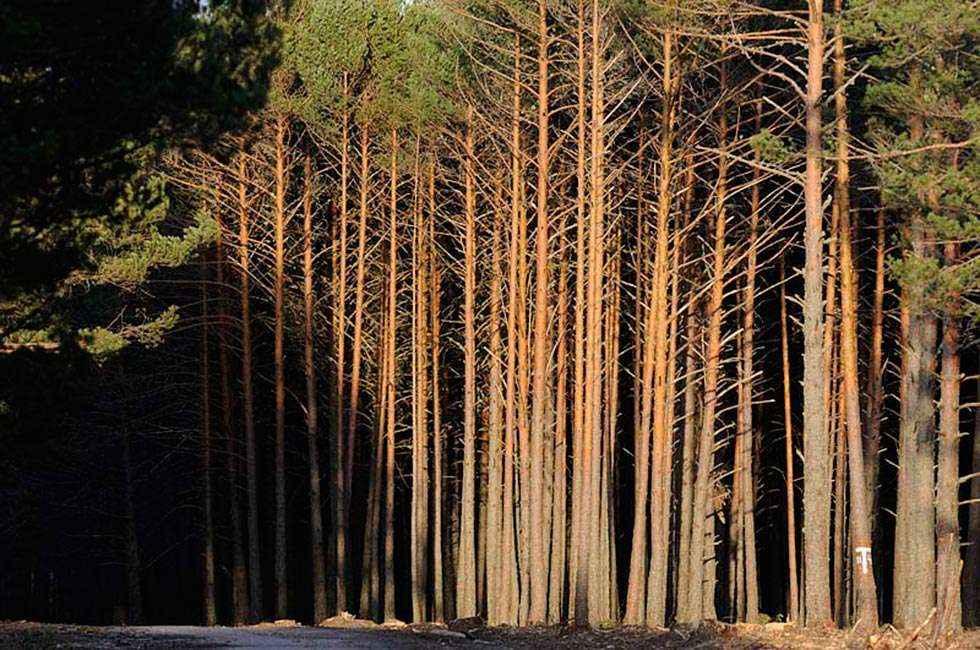 La Junta licita 23 lotes de madera en subasta telemática