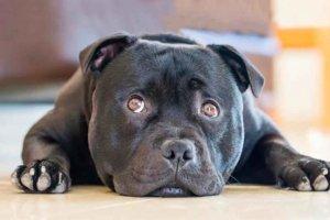 Ordenanza para regular la tenencia de animales de compañía