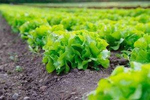 La producción ecológica sigue creciendo en la Comunidad
