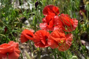 Flores silvestres de primavera - fotos