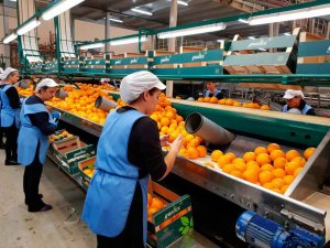 Nuevas ayudas para promover el cooperativismo agroalimentario