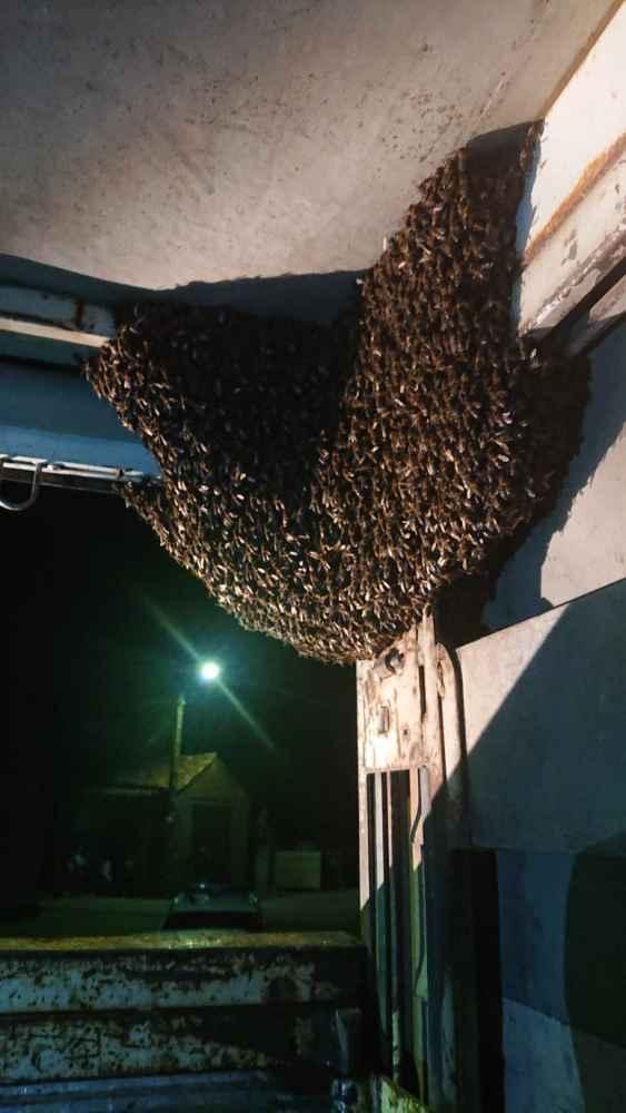 Retirado enjambre de abejas en camión averiado
