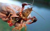 Ya se puede pescar cangrejos en la provincia