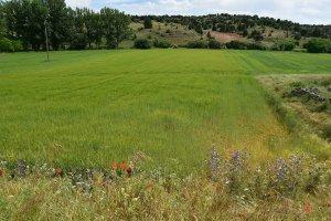COAG apunta campaña cerealista con 6,8 millones de toneladas