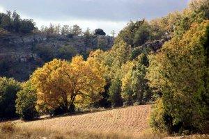 Soria reducirá vulnerabilidad de montes frente a cambio climático