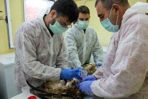 Voluntariado en el Centro de Recuperación de Animales Silvestres