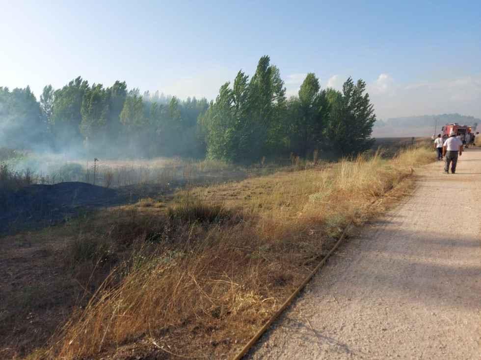 Incendio de chopera natural en Matalama de Almazán