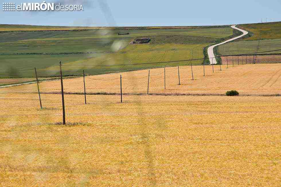 Agroseguro abona indemnizaciones a cultivos herbáceos