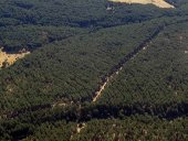 Piden incorporación de sector forestal a pacto de reconstrucción