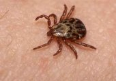 Confirmado caso de fiebre hemorrágica Crimea Congo