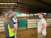 La clave de la mejora de productividad del sector ovino