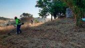 Mil ayuntamientos participan en plan de empleo forestal