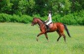 Mujer herida tras caérsele encima caballo desbocado
