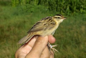 Jornadas ornitológicas en Fuentecantos