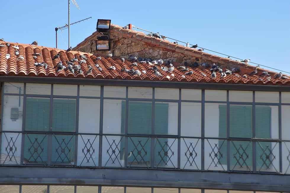 Estudio del potencial de energía renovable en edificios municipales