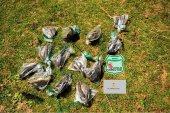 Utilizan avifauna muerta para ahuyentar a aves de huerto