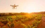 Drones para mejorar la vendimia en Ribera del Duero