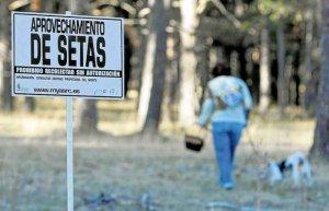 La Cámara urge aprovechar campaña micológica para turismo