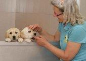 45 perros guía facilitan vida a ciegos en la región