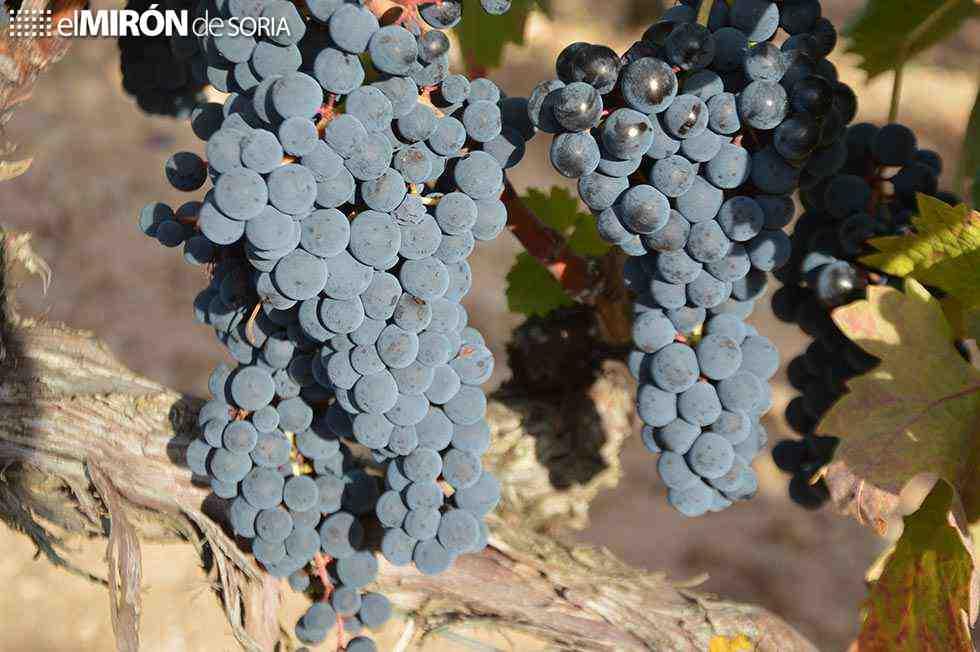 Advertencia de peligros de pastoreo en viñedos