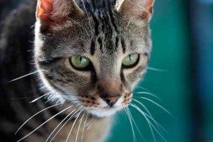 Renovado el convenio para controlar a gatos callejeros
