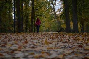 Almazán se viste de otoño - fotos