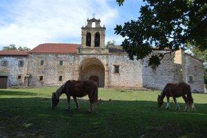 Dehesa de la ermita de los Santos Nuevos - fotos