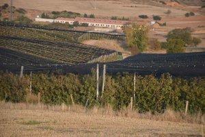 Valverde de Ágreda: manzanas junto al Moncayo -fotos
