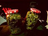 500 gramos de marihuana en hojas en Ólvega