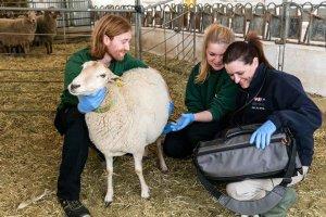 La Formación Sanitaria Especializada moviliza a los veterinarios