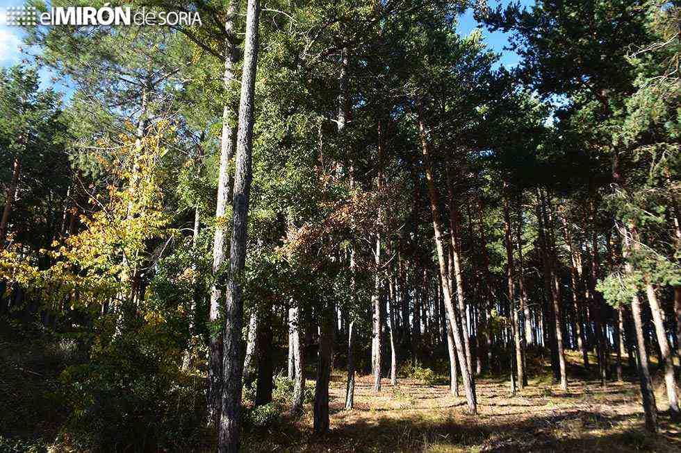 Subvencionada la reforestación de 323 hectáreas