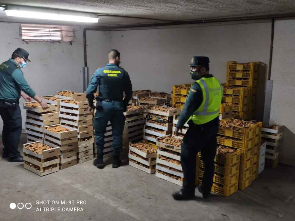 Incautados 1.320 kilos de níscalos en Langa de Duero
