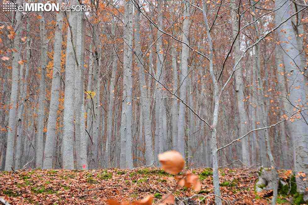 Valladolid acoge el I Congreso de la Propiedad Forestal