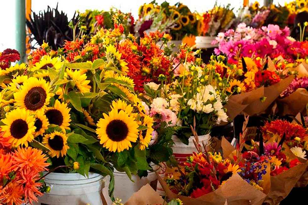 Campaña para animar al consumo de flores