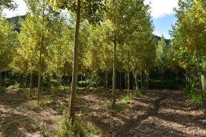 Propuestas del sector de la madera a la Junta