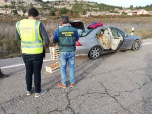 Otros 1.200 kilos de níscalos incautados en la provincia
