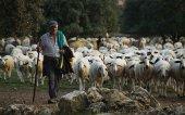 Actualizada identificación de cabaña ovina y caprina