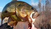 Medidas de control en pesca para especíes exóticas