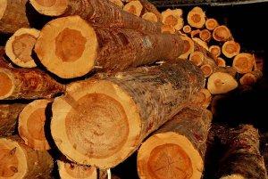 CESEFOR estudia caracterización de madera de pino