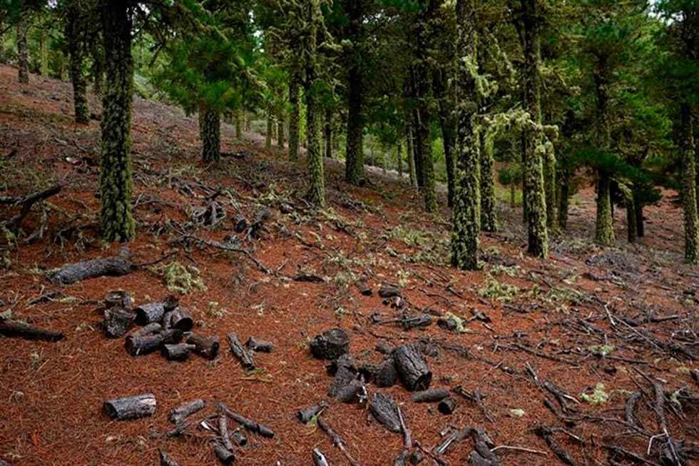 España apuesta por la cooperación contra la deforestación