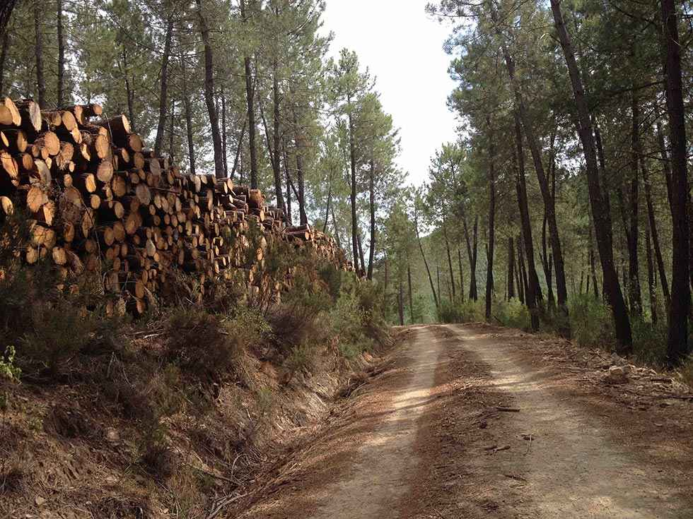 Licitados dos lotes de aprovechamientos de madera