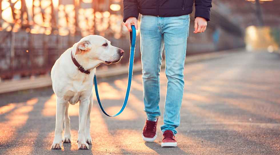 Los veterinarios piden más salidas para alivio de mascotas