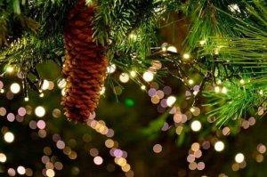 Contenedores específicos para los árboles de Navidad