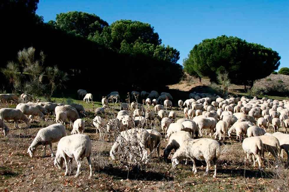 COAG al PSOE: o con el lobo o con los ganaderos
