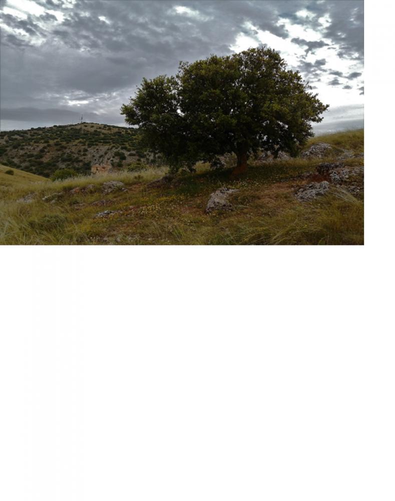 TRIBUNA/ Triste elegía para el Cerro de los Moros