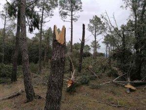 """El paso de un huracán por """"Los Monjitos"""""""