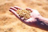 El Itacyl apuesta por investigación sobre leguminosas