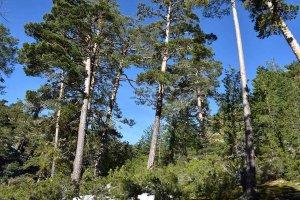Los bosques, escudos frente al cambio climático